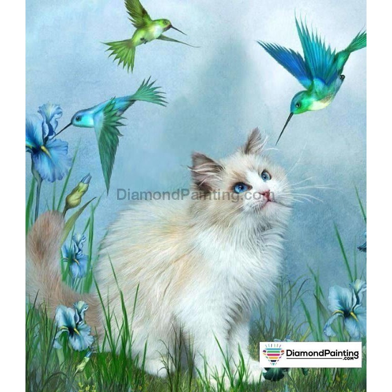 Birds and Cat Playin...